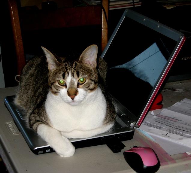 Albert on Computer 031610
